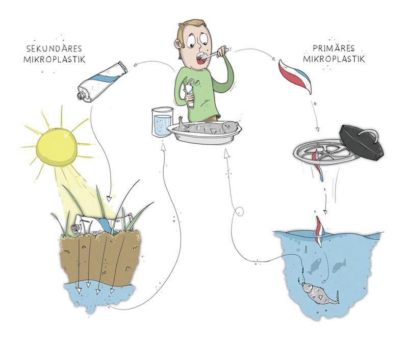 Primäres und sekundäres Mikroplastik landet über die
