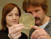 Joachim Morschhäuser und Julia Blaß-Warmuth betrachten eine Petrischale, in der sie den Pilz Candida albicans kultivieren. Bild: (Foto Robert Emmerich)