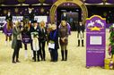"""Teilten sich Pferd Fidelius H und siegten gemeinsam: Stefanie Kerner (stehend) und Marie Bachmann mit den Gratulantinnen in der Siegerehrung des ST-Masters Dressur. Bild: """"obs/Comtainment GmbH/Thomas Hellmann"""""""