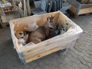 Bild des Rehs in der Transportbox. Bild: Polizei