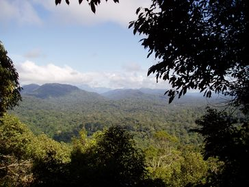 Regenwald in Malaysia (Symbolbild)