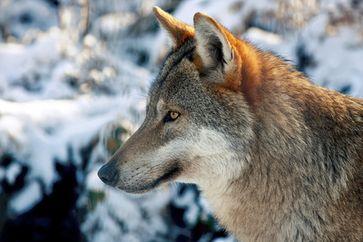 Bild: paukereks / pixelio.de