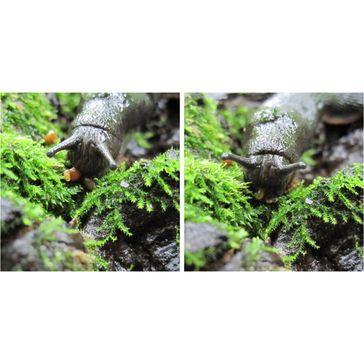 Wichtig für Wald-Ökosysteme: die Große Wegschnecke Quelle: Bild: M. Türke / TUM (idw)