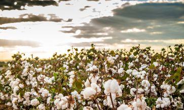 """Bei Kaufland gibt es nur noch Bio-Baumwolle. Bild: """"obs/Kaufland/Getty Images"""""""