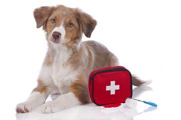 Bild: Bundesverband für Tiergesundheit Fotograf: Foto: BfT / Shutterstock