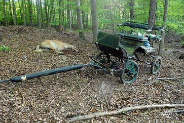 Pferdekutschenunfälle fordern immer wieder Opfer bei Mensch und Tie. Bild: 112-magazin.de