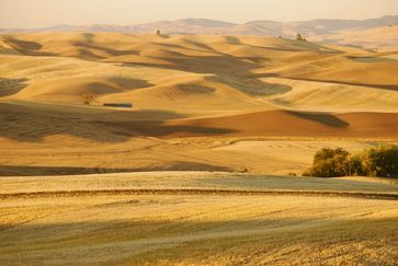 """Extrem artenarme """"Agrarsteppe"""" in der Region Palouse (USA), gibts auch schon in Europa - Subventionen sei dank."""