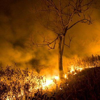 Der WWF führt 80 bis 90 Prozent der Brände auf menschliche Ursachen zurück. © WWF