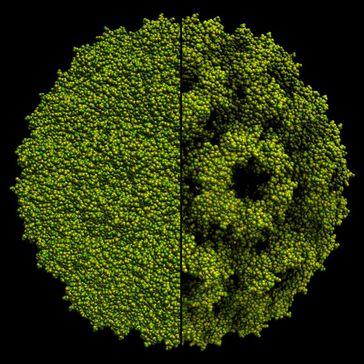 Visualisierung eines Virus mit 220.000 Atomen. Links: klassische Beleuchtung in Echtzeitcomputergrafik. Rechts: die Beleuchtung mit Ambient Occlusion macht die Oberflächenstruktur erheblich besser sichtbar. Quelle: Universität Stuttgart/SFB 716 (idw)