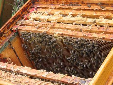 Bienenstock (Symbolbild)
