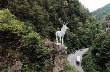 """Der berühmte Hirsch im Höllental - Symbol des Schwarzwalds.Bild: """"obs/SWR - Südwestrundfunk"""""""