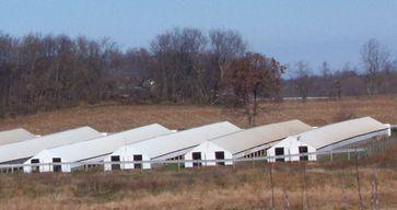 Nerzfarm in Wisconsin