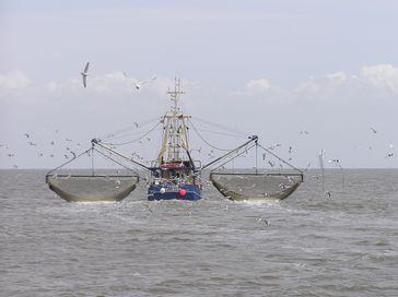 Krabbenkutter Ivonne aus Pellworm beim Fischen