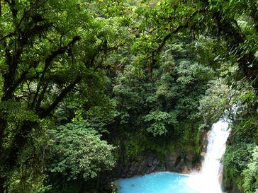 Regenwald mit Wasserfall