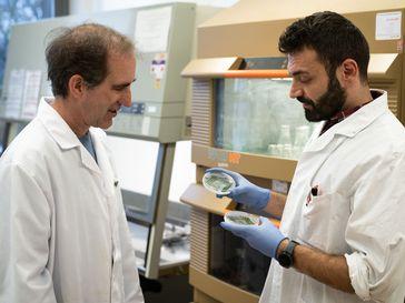 Prof. Dörmann (links) und sein Doktorand Mohammed Aizouq mit zwei verschiedenen Cyanobakterien-Kulturen. Quelle: (c) Foto: Yannic Müller/Uni Bonn (idw)