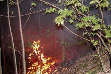 Waldstück bei Bieselsberg in Flammen. Bild: Feuerwehr Schömberg