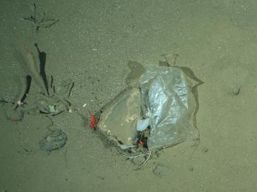 Plastiktüte in der Framstraße Quelle: Foto: M. Bergmann / Alfred-Wegener-Institut (idw)