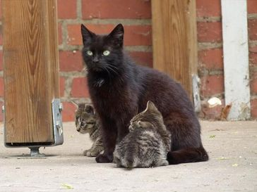Streunerkatzen leiden an Hunger und Krankheiten. Bild: VIER PFOTEN