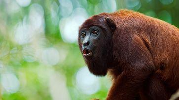 "Bild: ""obs/3sat/BlinkFilms/Wildlife24/Zacarias"""