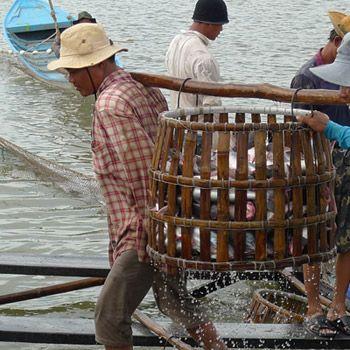 Pangasiusfischerei in Vietnam. Bild: Catherine Zucco / WWF
