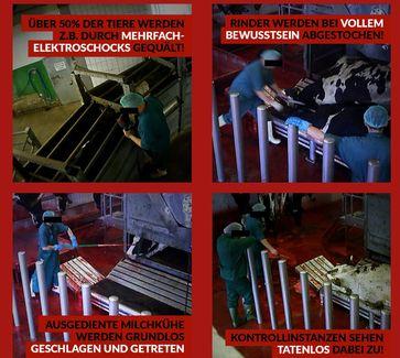 Bild: Screenshot vom Deutschen Tierschutzbüro e.V.