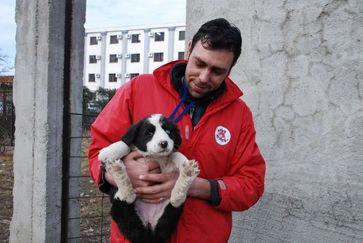 VIER PFOTEN hat bereits über 100.000 Streunerhunde in Rumänien eingefangen, kastriert, versorgt und im angestammten Revier freigelassen. Bild: (C) VIER PFOTEN