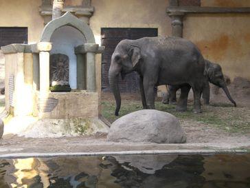Elefanten-Freilaufhalle
