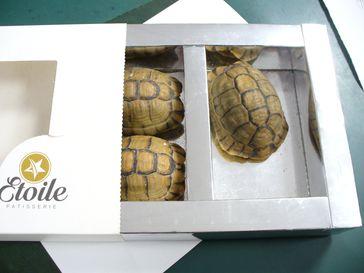 lebendes Schildkröten in Schokoladenverpackung