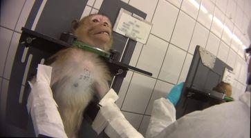 "Bild: ""obs/SOKO Tierschutz e.V./SOKO Tierschutz/crueltyfree int"""