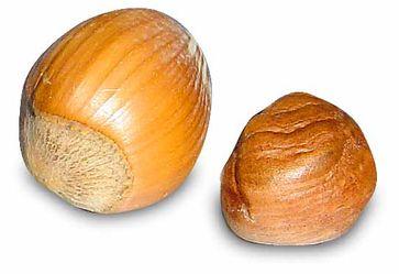 Gemeine Hasel Links Nuss, rechts Samen Bild: Horst Frank / de.wikipedia.org