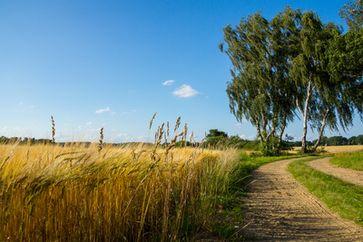 Bauern, Landwirtschaft, Feld, Getreide, Landschaft...