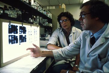 Ebola: Researchers looking at slides of cultures of cells that make monoclonal antibodies. These are grown in a lab and the researchers are analyzing the products to select the most promising of them.