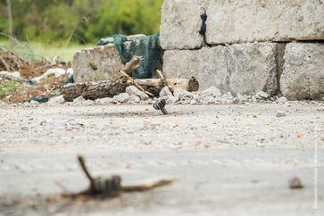 Szene vom Krieg in der Ukraine. Bild:   Sasha Maksymenko   CC BY 2.0 - Flickrview