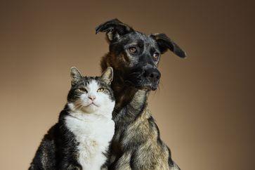 "Fondazione Capellino AdoptMe Kampagnenbild - Cat & Dog / Hund & Katze /  Bild: ""obs/Fondazione Capellino/Jaap Vliegenthart Fotografie b.v"""