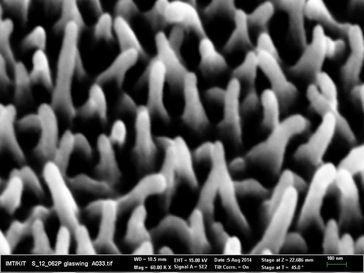 Nanostrukturen auf der Oberfläche des Schmetterlingsflügels Quelle: Foto: Radwanul Hasan Siddique, KIT (idw)