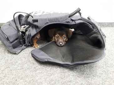 Hundewelpe Bild: Polizei