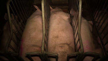 Bild: Animal Rights Watch e.V.