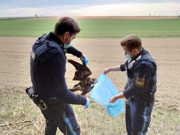 Bild: Komitee gegen den Vogelmord e. V. Fotograf: Alexander Heyd