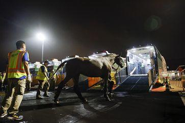 Bild: Fédération Equestre Internationale