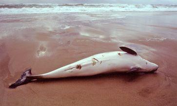Bild: Gesellschaft zur Rettung der Delphine e.V. (GRD)