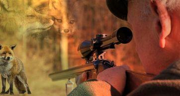 Jagd: Jedes Jahr werden dutzende Menschen durch jäger getötet, genauso wie eines große Zahl an Tieren verletzt - ohne Grund (Symbolbild)