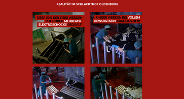 """Bild: Screenshot von der Webseite """"tierschutzbuero.de"""""""