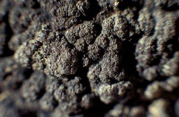 Nahaufnahme einer Manganknolle, Bildbreite: 3 cm
