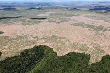 Entwaldung im Amazonasbecken