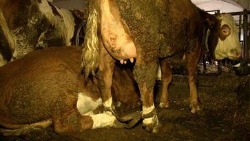 Bild: Animal Rights Watch e.V