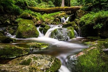 Naturwald mit Bach (Symbolbild)