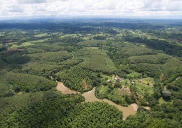 Erfolgreiche Wiederaufforstung: 2008 begannen die Baumpflanzungen auf der Finca San Rafael. Bereits acht Jahre später, im Jahr 2016, zeigt sich der Mischwald mit geschlossenem Kronendach. Bild: Stiftung FuturoVerde (idw)