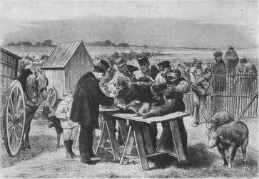 Zeitgenössische Darstellung des Demonstrationsversuchs zur Milzbrandimpfung, den Pasteur in Pouilly-le-Fort unternahm