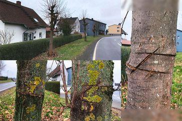Collage mit den beschädigten Ahornbäumen Bild: Polizei