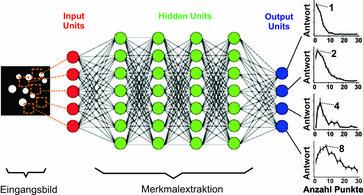 In einem 'deep-learning'-Netzwerk, das lediglich auf die Zuordnung von Fotos trainiert wurde, bilden sich spontan künstliche Neuronen heraus, die auf verschiedene Lieblingszahlen abgestimmt sind. Bild: Andreas Nieder (idw)